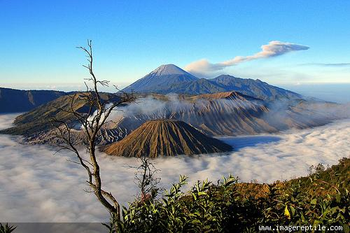 mount bromo volcano is still active and most famous as a tourist attraction in east java as tourism area become attractive because of its